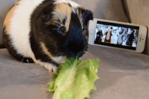 Meet Henry the Pig!