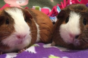 Two shy bonded females