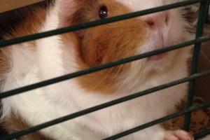 Sweet Little Piglet needs a new home!