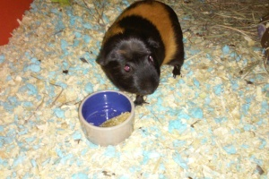 Sweet Young Boar Needs New Home
