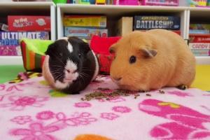 Zippy & Marigold