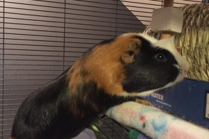 Two Sweet Males for Loving Owner