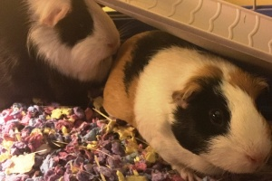 Up for adoption - bonded pair of females