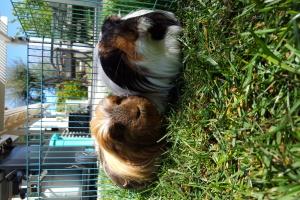 Ziggy and Zoey