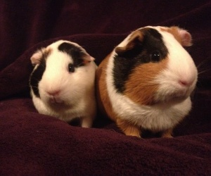 Sapphire & Ivy, Bonded Female pair.
