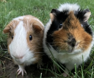 Harold and Whiz