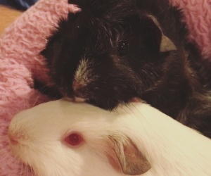 Bonded female pair Cici & Penelope