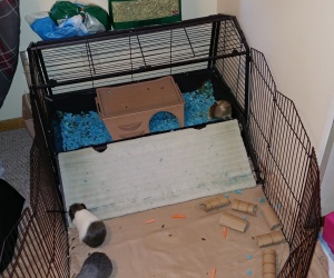 cage and play yard