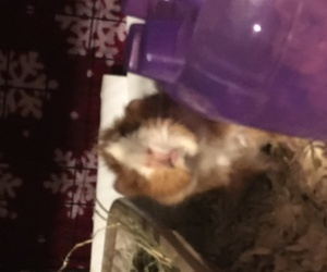 2 Females need rehome