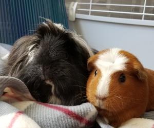 Penny & Gracie