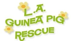 Los Angeles Guinea Pig Rescue