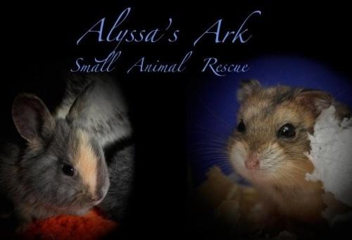 Alyssa's Ark Small Animal