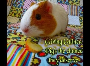 Auckland Cavy Care