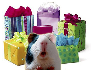 Everyday Gifts Guinea Pig