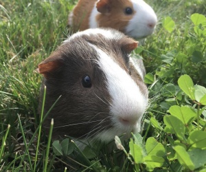 Bonbon (front) and his cagemate :)