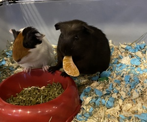 Moose and Bear when we first got them