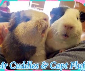 Mr. Cuddles & Capt Fluff