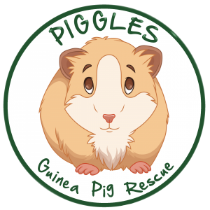 Piggles Guinea Pig Rescue