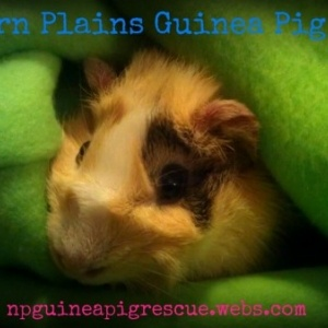 Northern Plains Guinea Pig Rescue