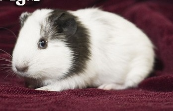 Orange County Cavy Haven