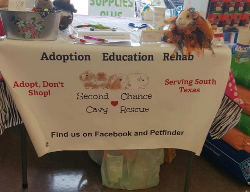 Second Chance Cavy Rescue